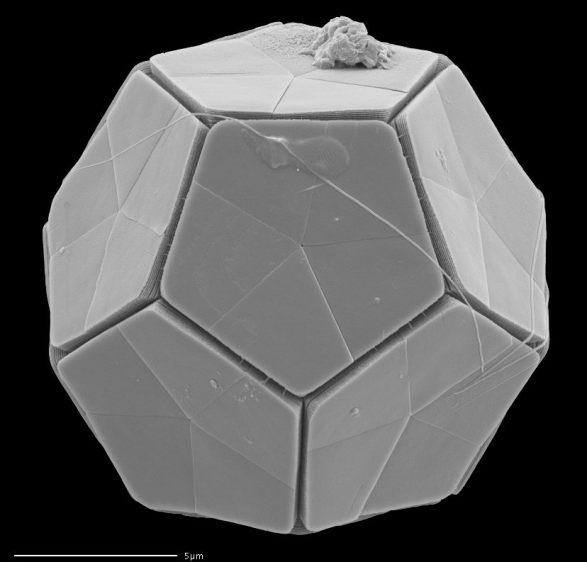 Plankton Dodecaedro